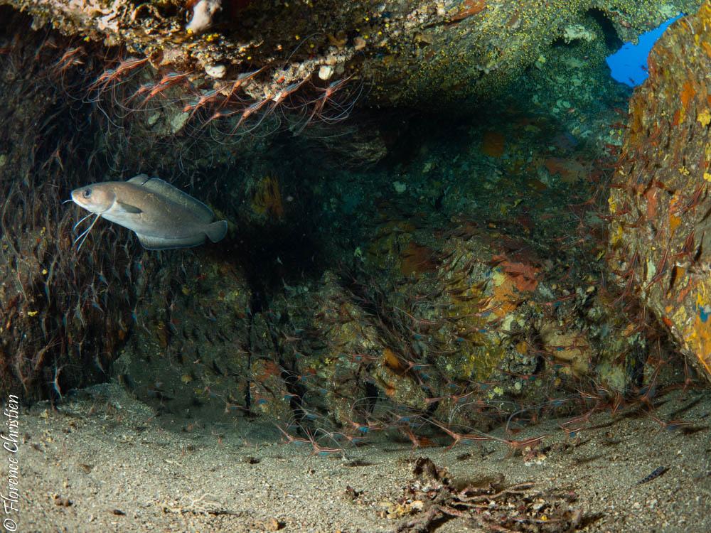 grotte aux 1000 crevettes